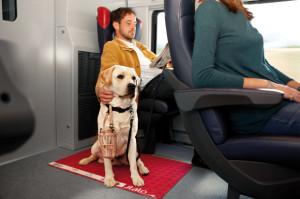 trenes en italia perros